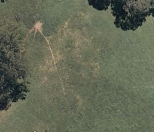 Meat ant nest and trails from Google Earth!